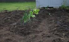 【外構】敷地に余裕があれば家庭菜園オススメです!