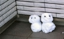 ウッドデッキの罠・・・「落雪→窓割れ」が心配!!