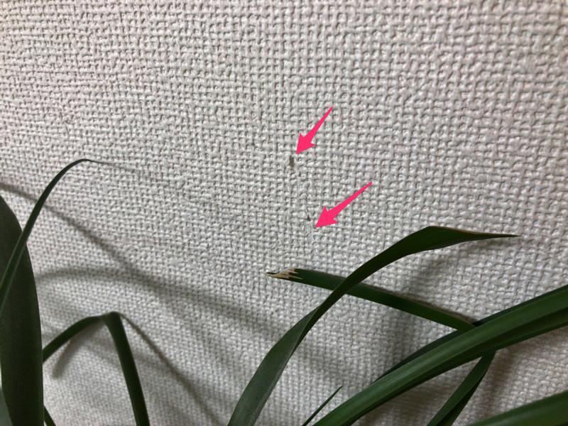一条工務店と大日本印刷の壁紙樹脂脱落の観葉植物接触